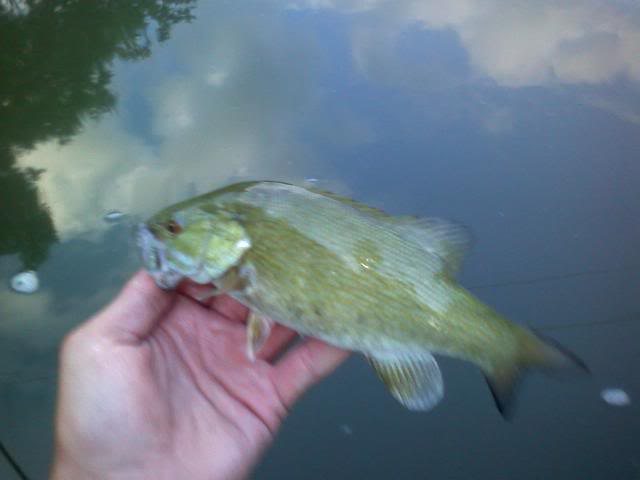 River Smallies 0705092025