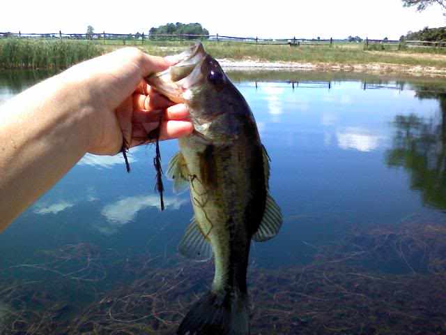 New Pond Large-I mean large! Bass F.O. Bass 0708091312