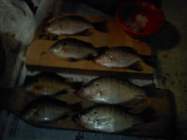 More late fall crappie and bluegill in NW Ohio 1025091931