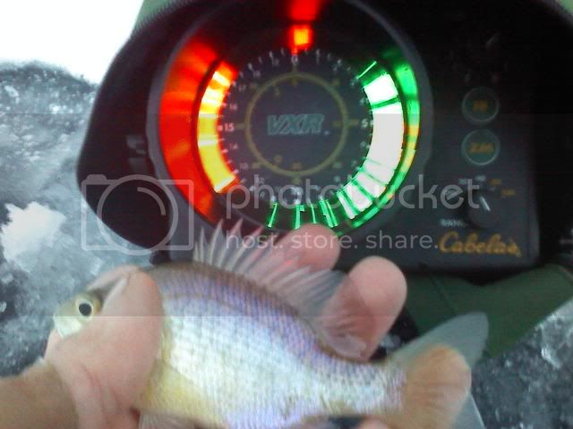 More ice fishing in NW Ohio! Catching crappie/lil gills 0105101706