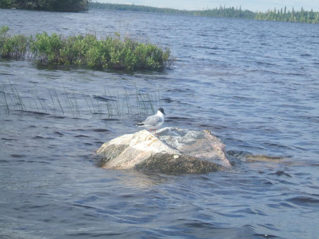 Pasha Lake-Canadian Wilderness Fishing 060