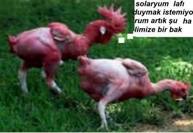 Hayvanların Komik Halleri 347868617