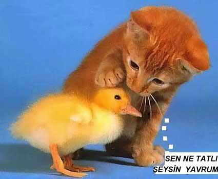Komik 3 Cute-kitty-chick