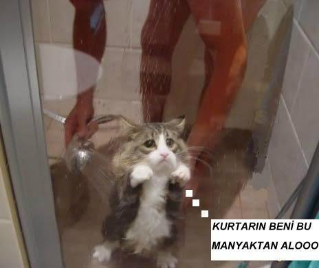 Hayvanların Komik Halleri Cute-sad-kitten-shower-pic114