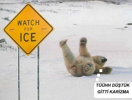 Hayvanların Komik Halleri Funny-polar-bear-pic-img121