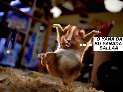 Hayvanların Komik Halleri Kungfuhamster