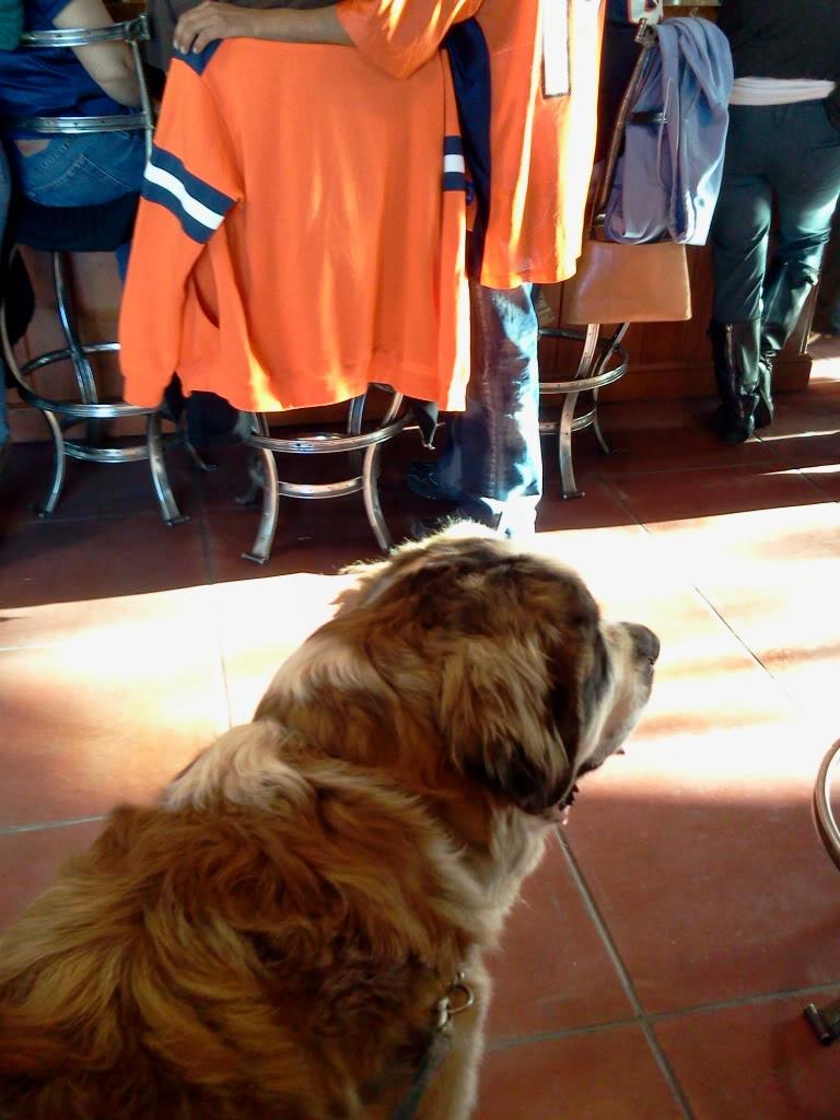 Dog Friendly Places 2012-01-14143906