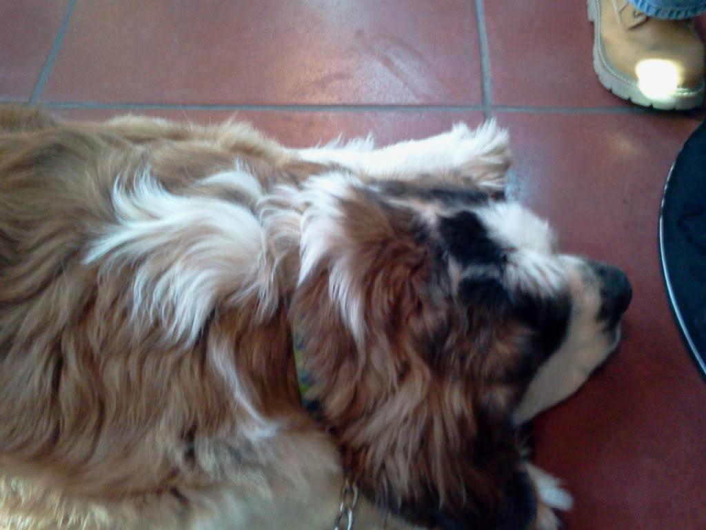 Dog Friendly Places 2012-01-14145738