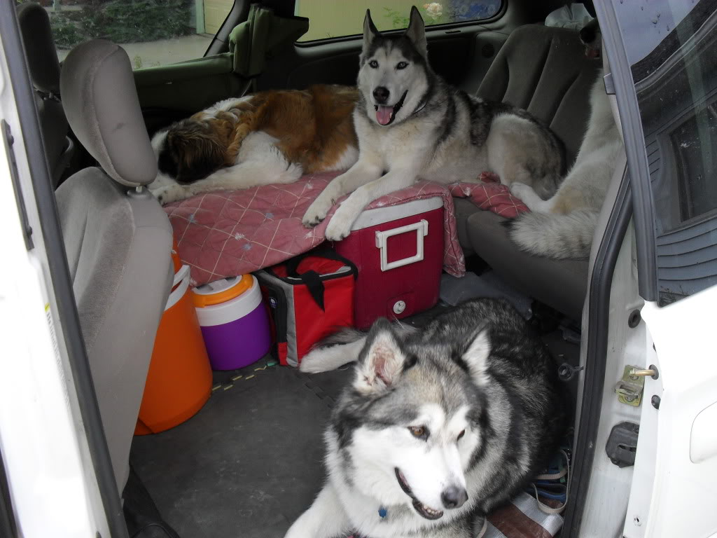 Best car for transporting two huskies SDC12268
