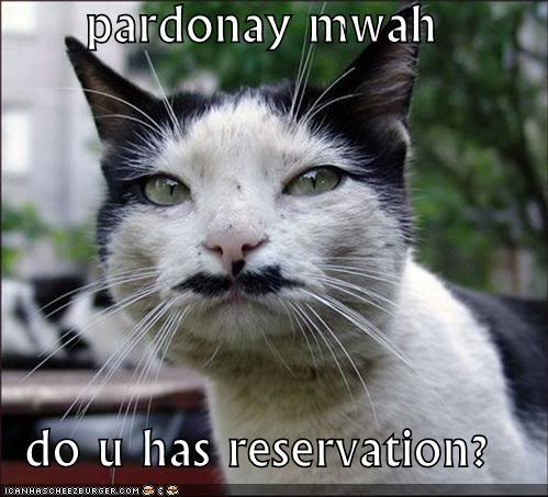 Funny Cats Funny-picture-pardonay-mwah-cat