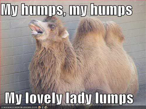 Funny Cats Funny-pictures-camel-sing-humps-son