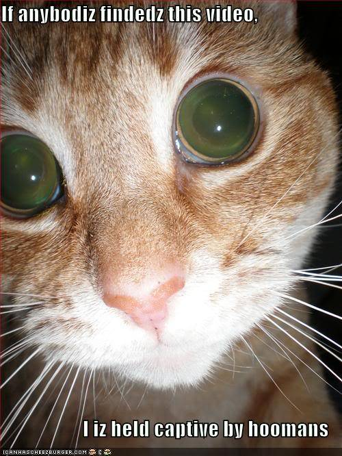 Funny Cats Funny-pictures-cat-eyes-camera-flas