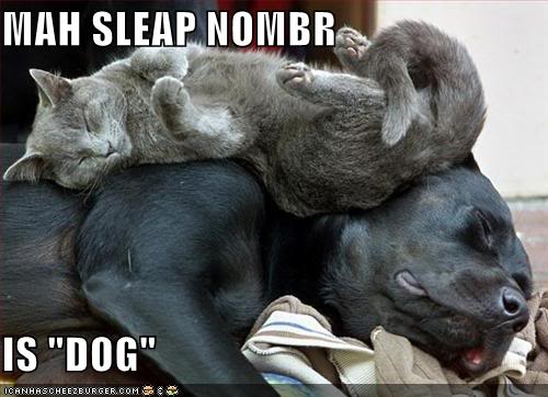 Funny Cats Funny-pictures-cat-sleeps-dog-bed