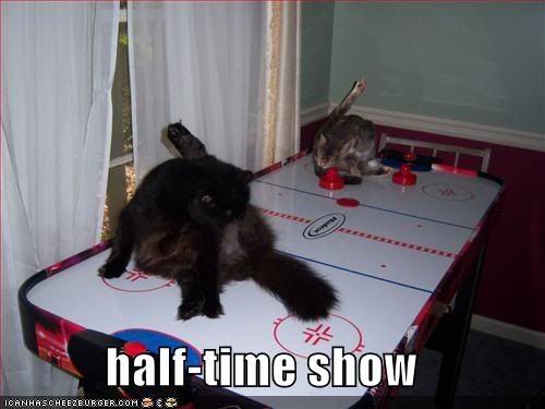 Funny Cats Funny-pictures-half-time-show