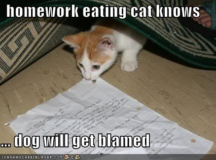 Funny Cats Funny-pictures-homework-eating-cat