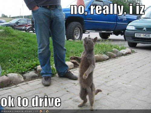 Funny Cats Funny-pictures-ok-to-drive-cat