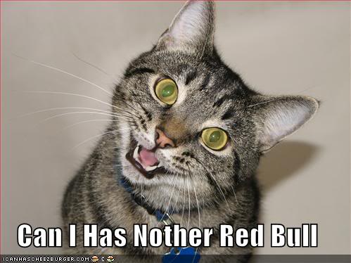 Funny Cats Funny-pictures-red-bull-cat