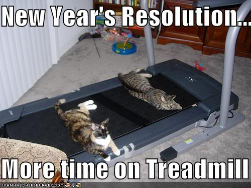 Funny Cats Funny-pictures-resolution-cats-trea