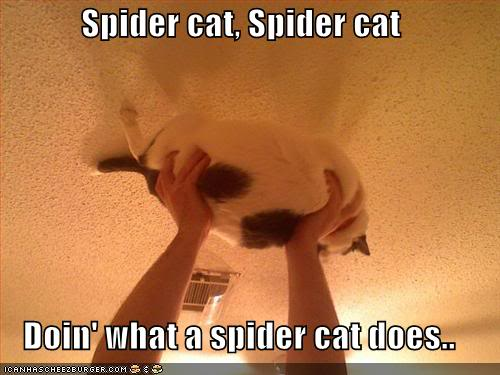 Funny Cats Funny-pictures-spider-cat
