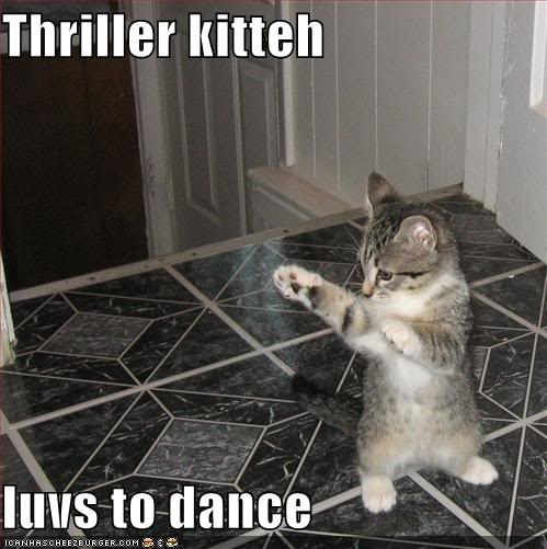 Funny Cats Funny-pictures-thriller-kitten