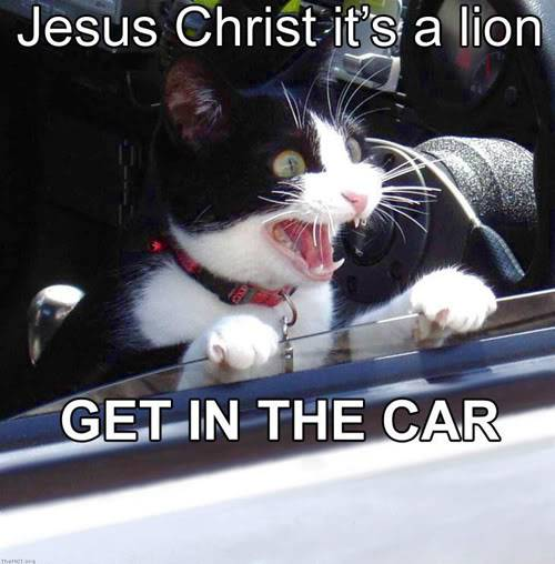 Funny Cats Jesus_christ_its_a_lion