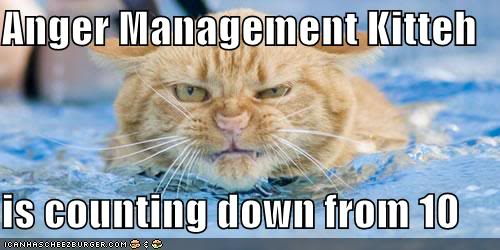 Funny Cats Lolcats-funny-pictures-angermanagem