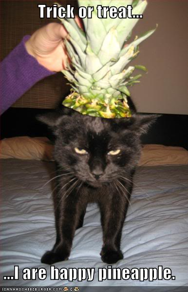 Funny Cats Lolcats-funny-pictures-happy-pineap