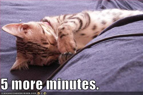 Funny Cats Moreminutes