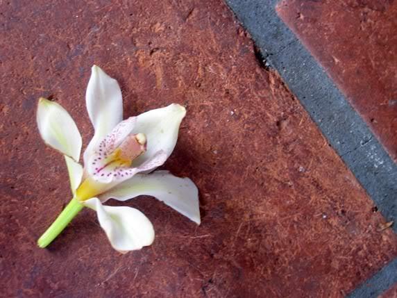 சேனையை அலங்கரிக்கும் பூக்கள் 02 - Page 17 FLOWERS