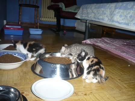 Magrath y sus cachorros P1010739