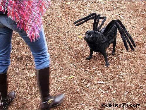 Hayvanlar ve Kostümler Dogweirdcostume01