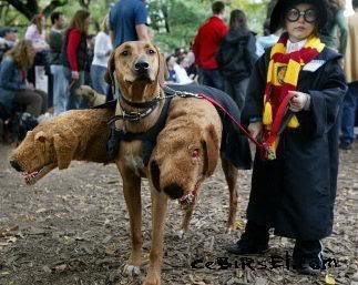 Hayvanlar ve Kostümler Dogweirdcostume02