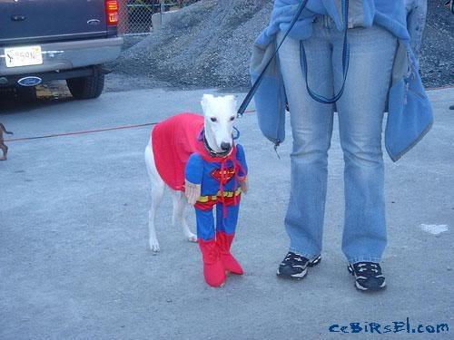 Hayvanlar ve Kostümler Dogweirdcostume03