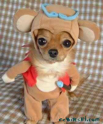Hayvanlar ve Kostümler Dogweirdcostume05