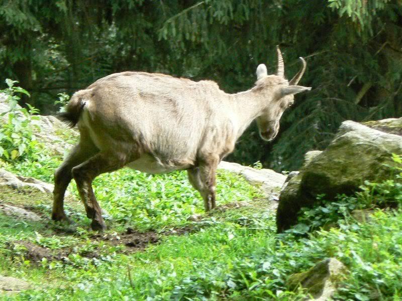 [T][P] 12.06.2011 : Steinwasen Park P1130484