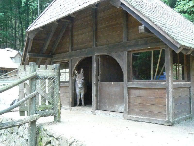 [T][P] 12.06.2011 : Steinwasen Park P1130550