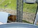 [T][P] 12.06.2011 : Steinwasen Park Th_P1130453