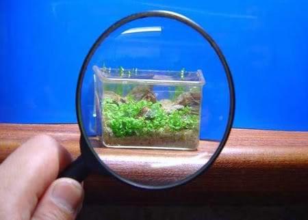 Las cosas mas pequeñas del mundo Acuariopequeo
