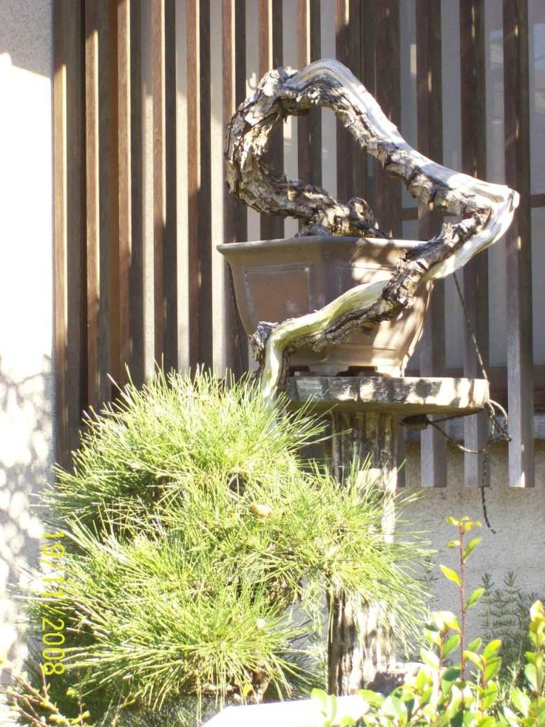 Elementos by Sergivaldo Costa... MahleJapo2008-Nagao-san033