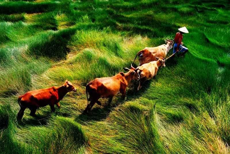 Ảnh đẹp quê hương Việt Nam. B7911ctanhque