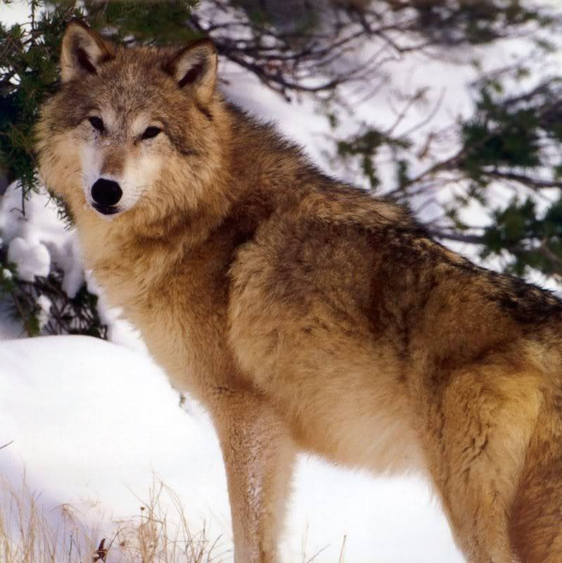 ~ New Moon Wolf Pack ~  Beautiful