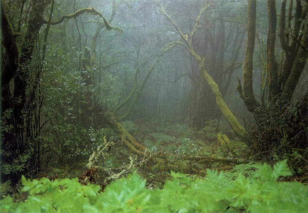 deepforest2.jpg deep forest image by matticusplatypus