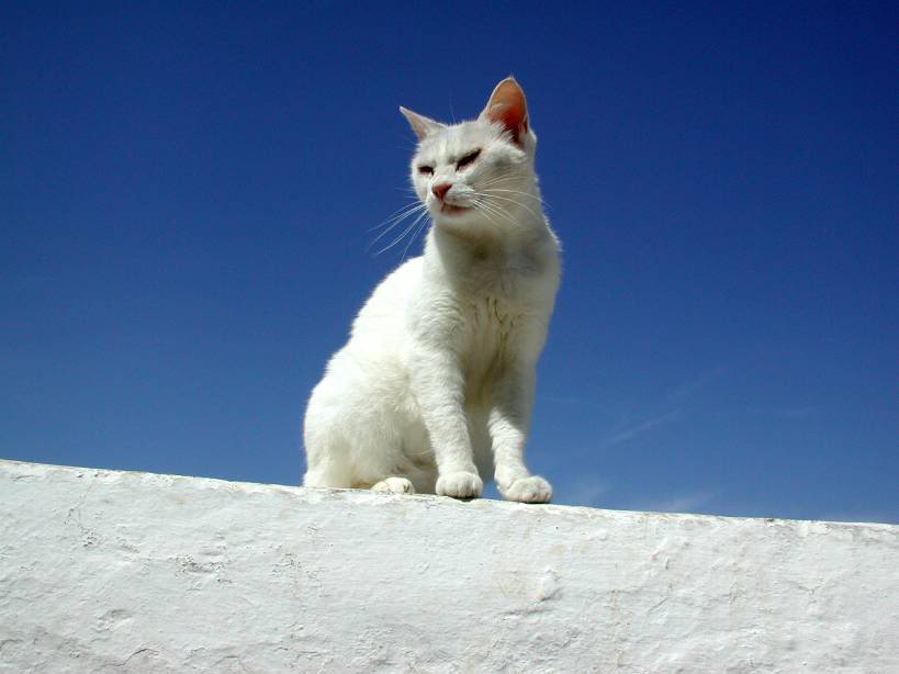 Dreadpath's Kitties!!  01_white_cat_in_ia