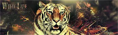 [Votaciones] FDLS #7 Tema: Animales Animalcopia