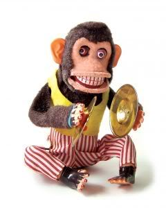O MICO DO DIA Macaco-louco