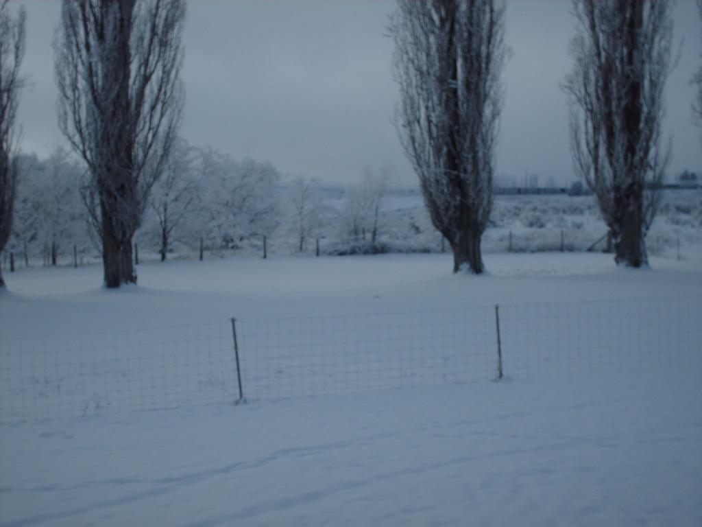 Cat Ran Away Winter001_zps78a89f22
