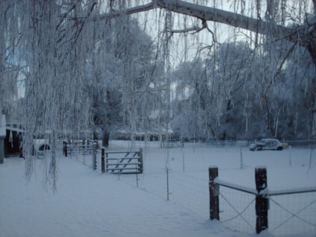 Cat Ran Away Winter002_zpsa98ac088