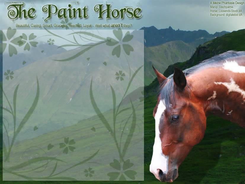 The Paint Horse Thepain2t-2