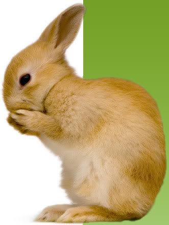 صور ارانب روعة Large_rabbit1