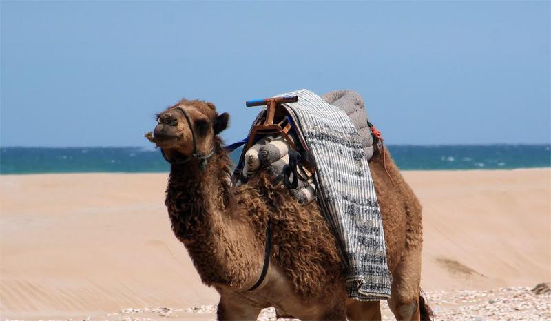 صور من إقليم الناظور في منطقة الريف شمال المغرب Bucana16